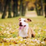 Focení domácích mazlíčků a psů